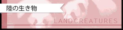 QUIZ:あの名前の由来は?|陸の動物の語源